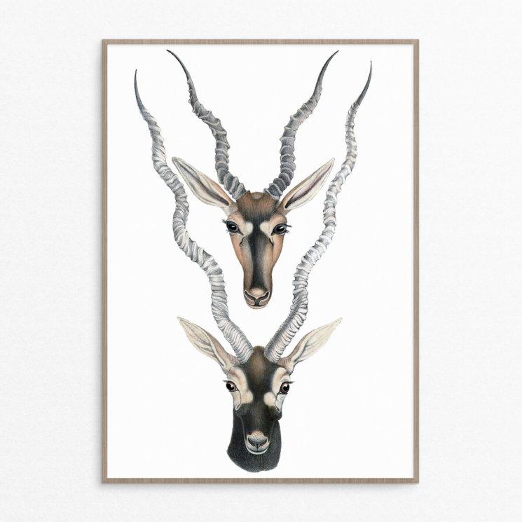 plakat, dyr, minimalistisk, nordisk, hjorte