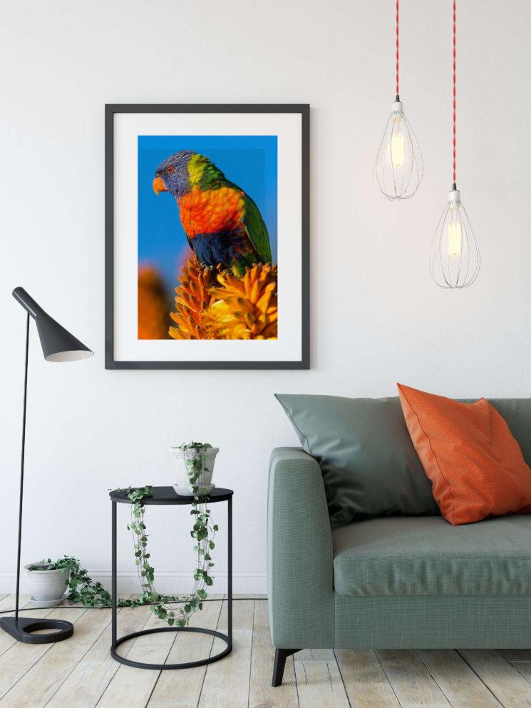 plakat, papegøje