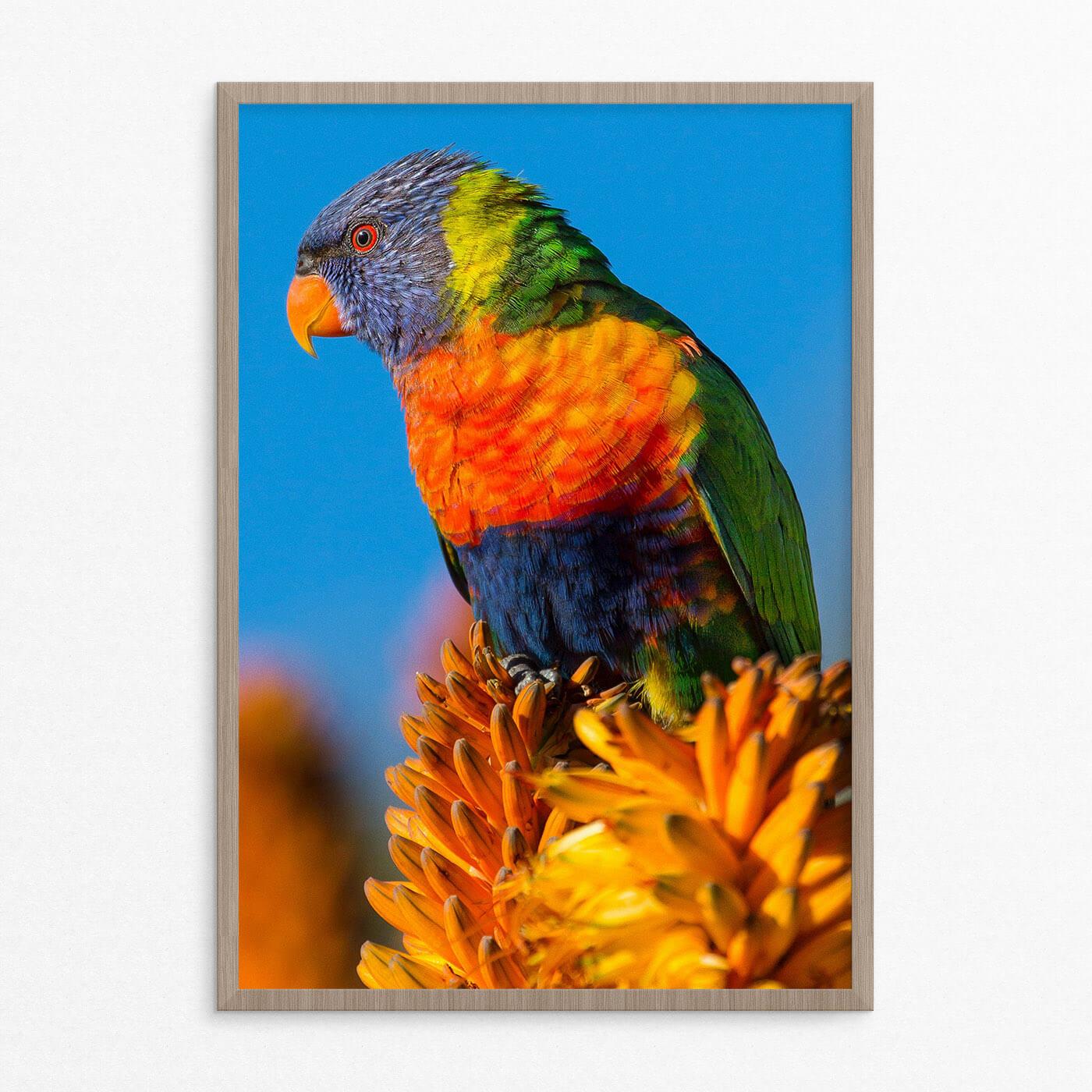 Plakat, dyr, fugl