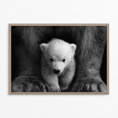 Plakat, dyr, isbjørn