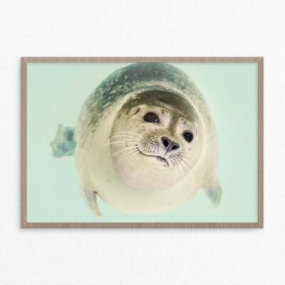 Plakat, dyr, sæl