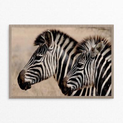 plakat, dyr, zebra