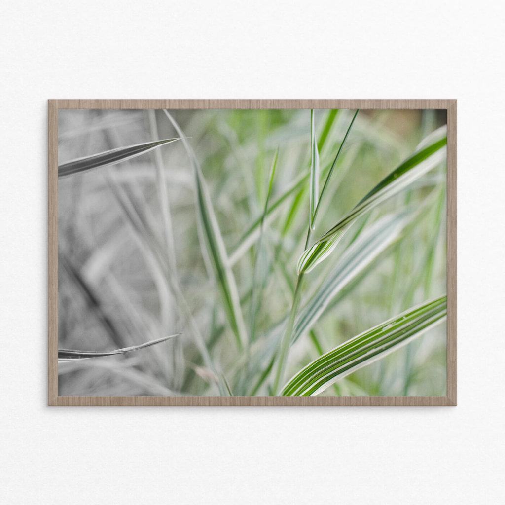 Plakat, natur