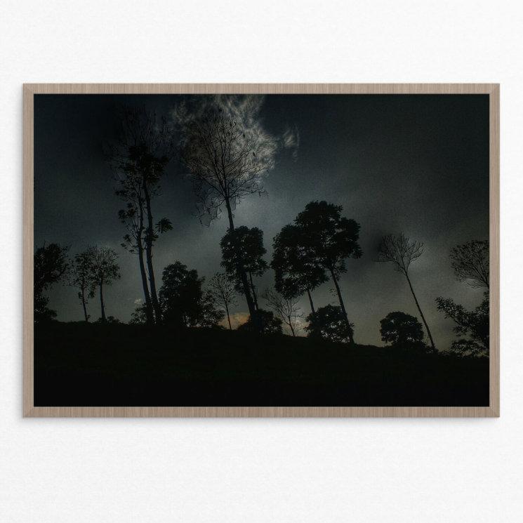 Plakat, skov, natur