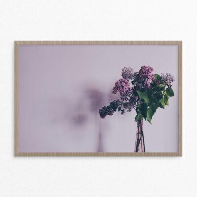 plakat, blomst, lilla