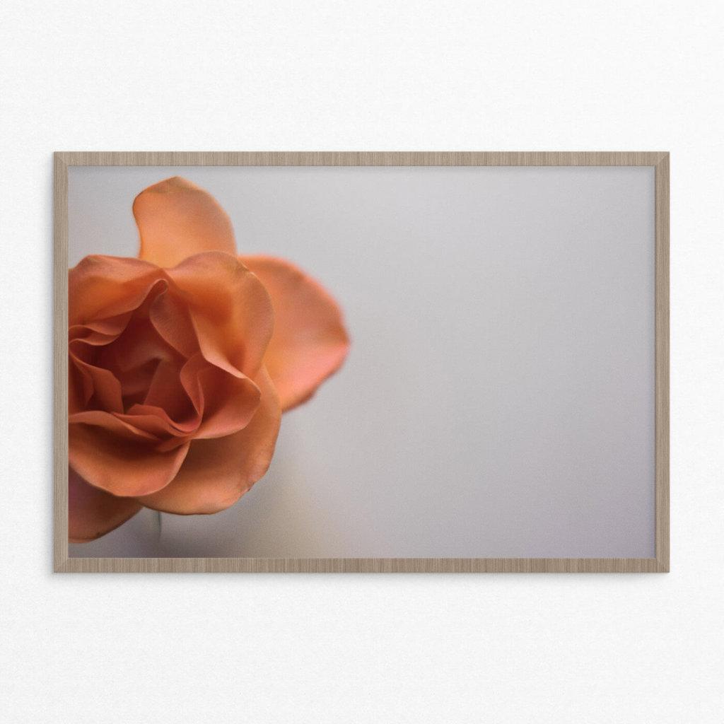plakat, blomst, orange