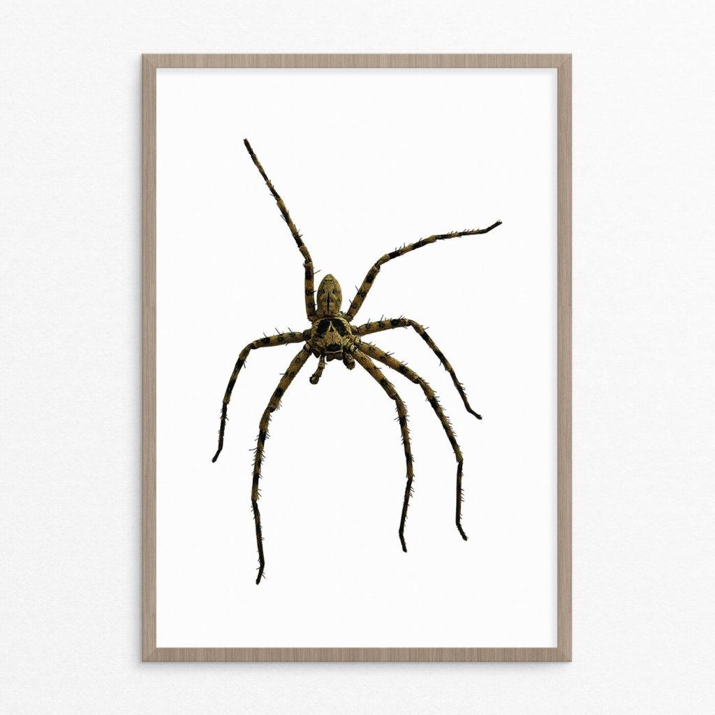 plakat, dyr, edderkop