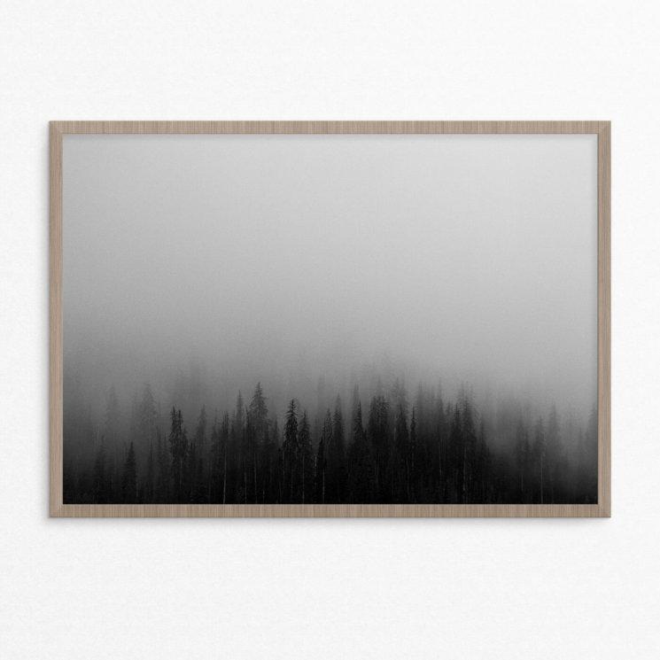 plakat, natur,skov, tågedis