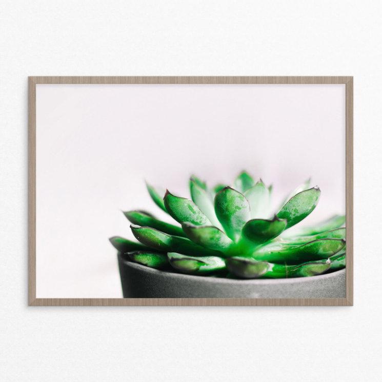 plakat, plante, grøn