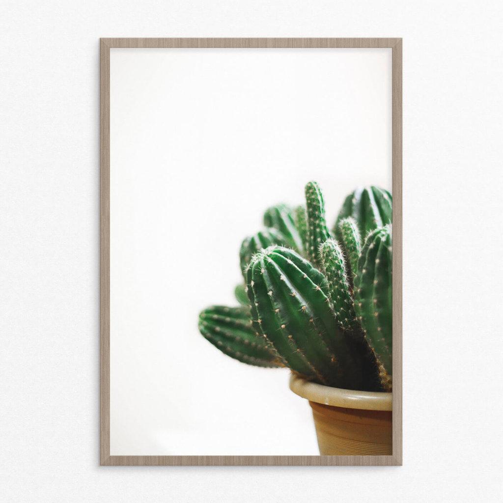 plakat, plante, kaktus