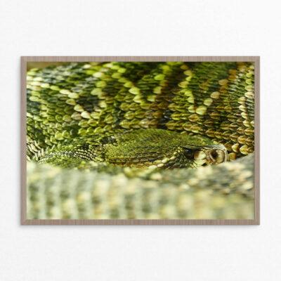 plakat, slange