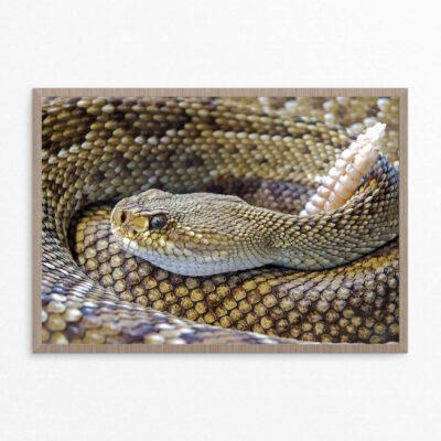 plakat, slange,