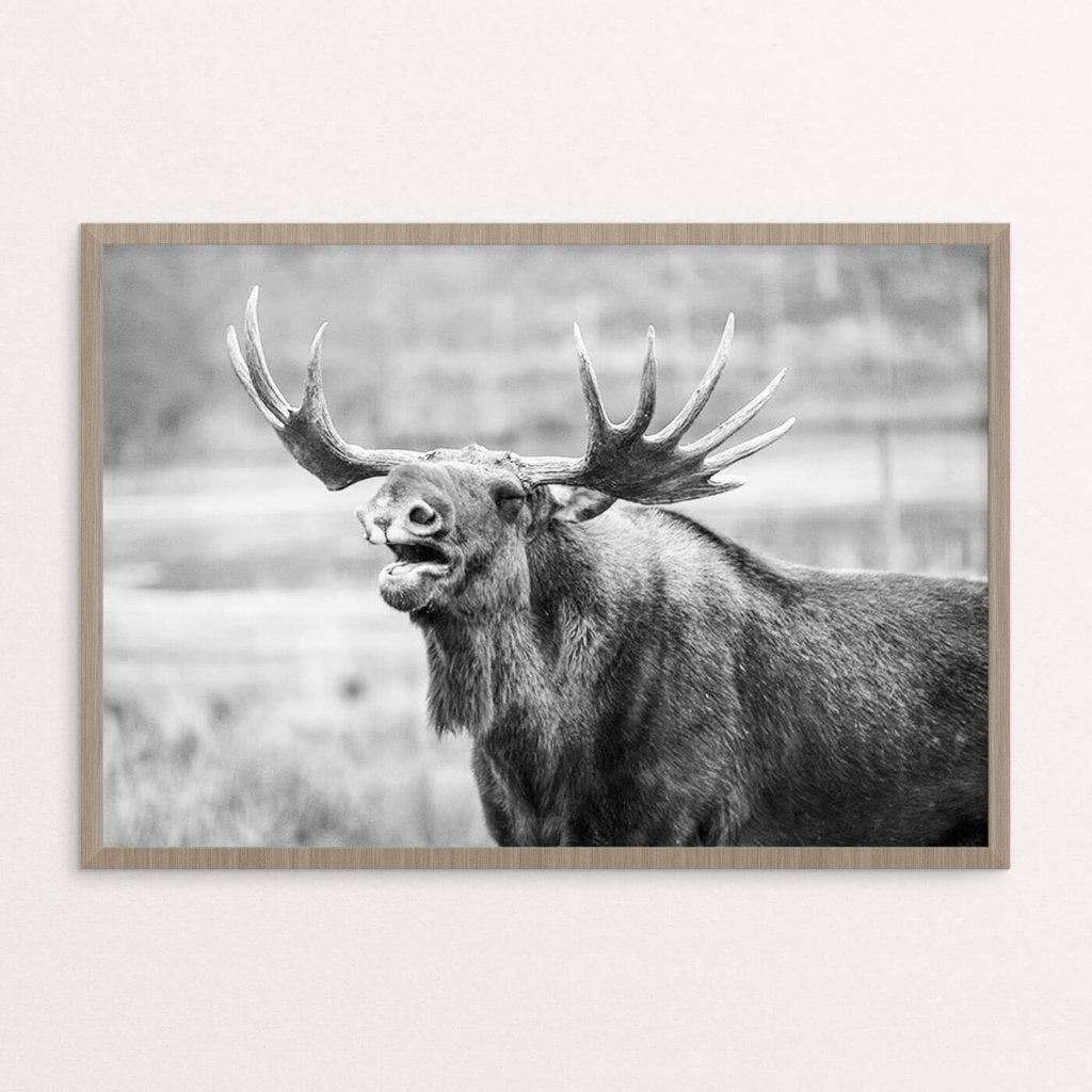 Plakat, dyr, elgko