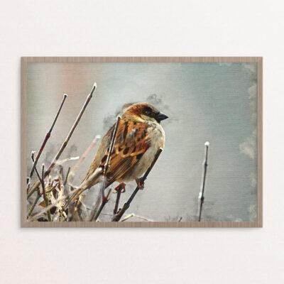 Plakat, dyr, fugl, akvarel