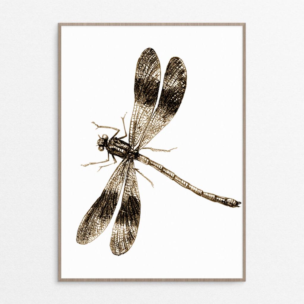 billig Plakat, dyr, insekt, guldsmed