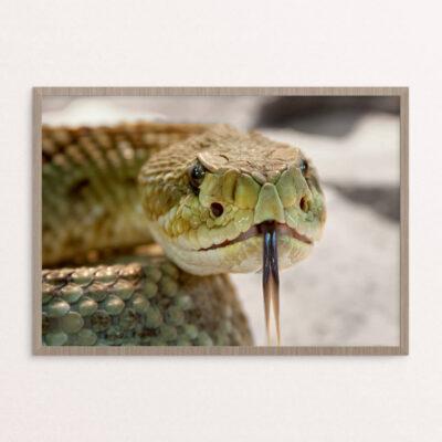 plakat, dyr, slange