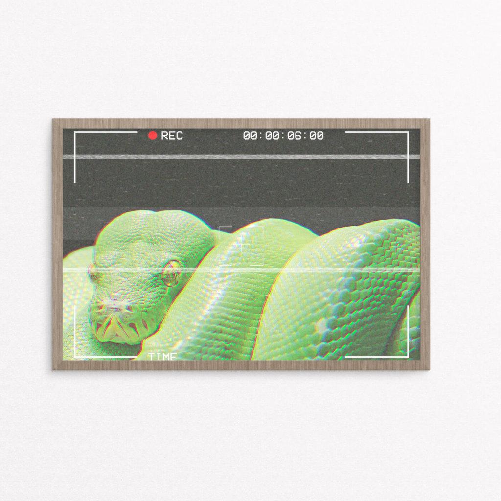 plakat, dyr, slange,