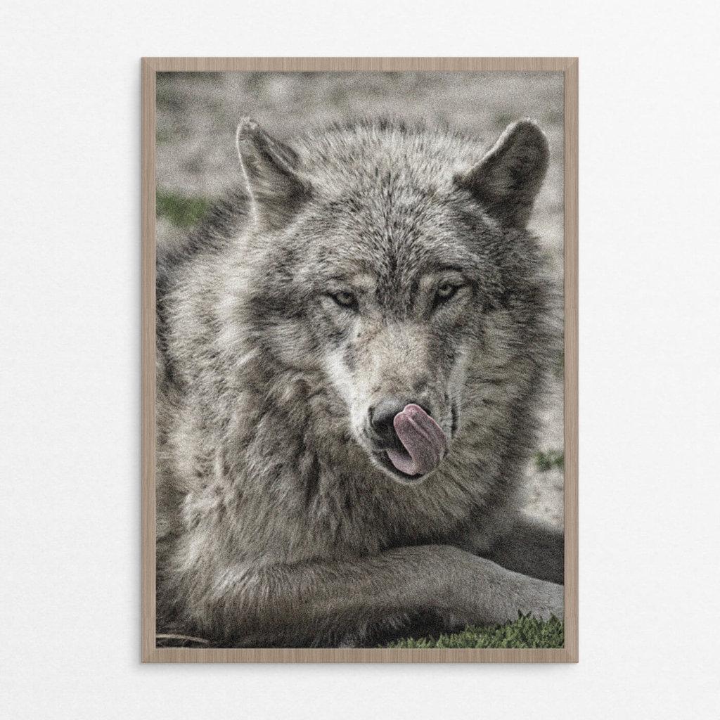 billig plakat, dyr, ulv