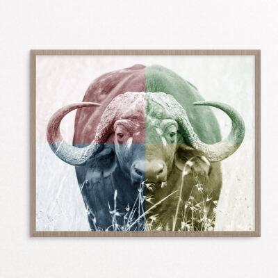 plakat, dyr , vandbøffel
