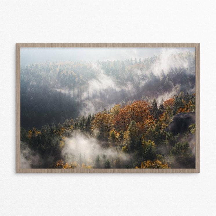 plakat, natur,skov, efterår