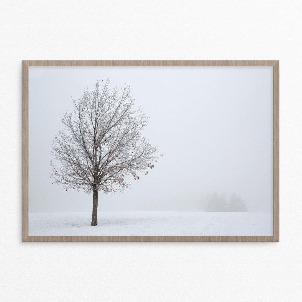 plakat, natur,skov, enkelt træ