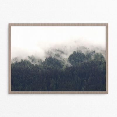 plakat, natur,skov, gran