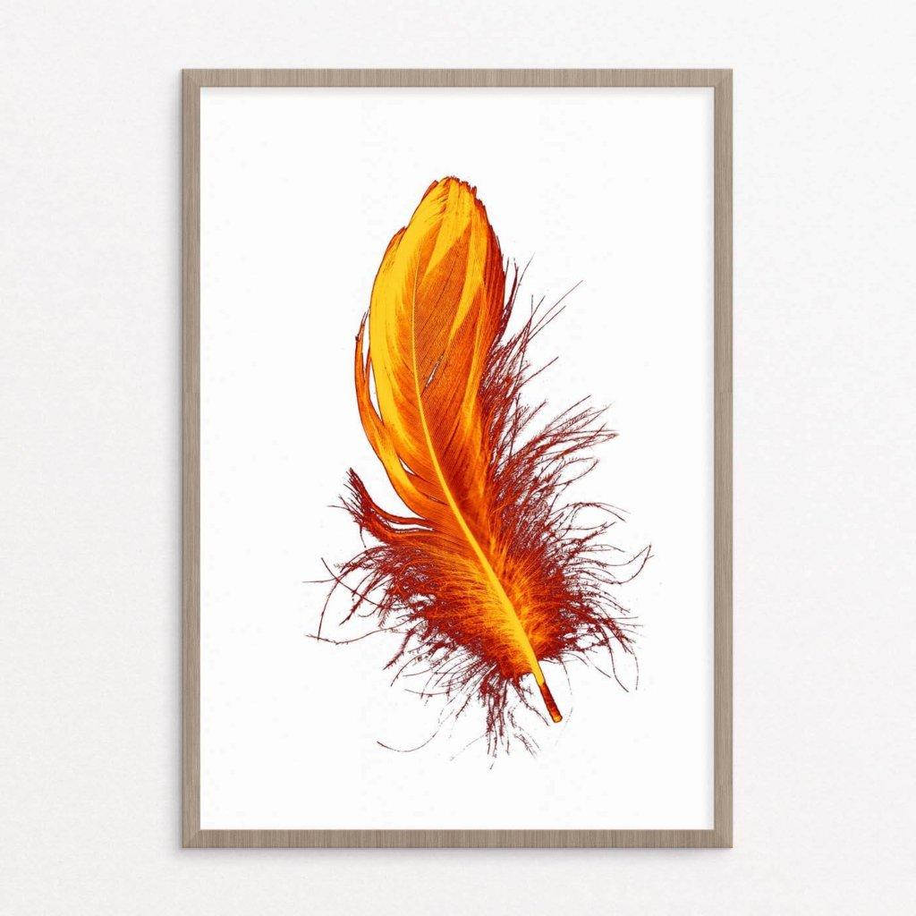 plakat, fjer, fugl, orange